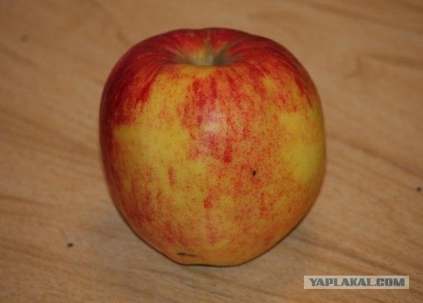 Готовим кальян на яблоках! (18 фот!+комменты)