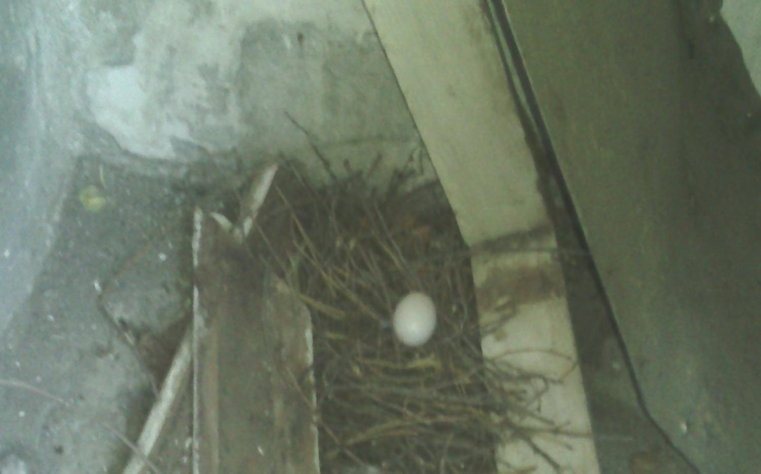 Как убрать голубей с балкона - Яплакалъ.