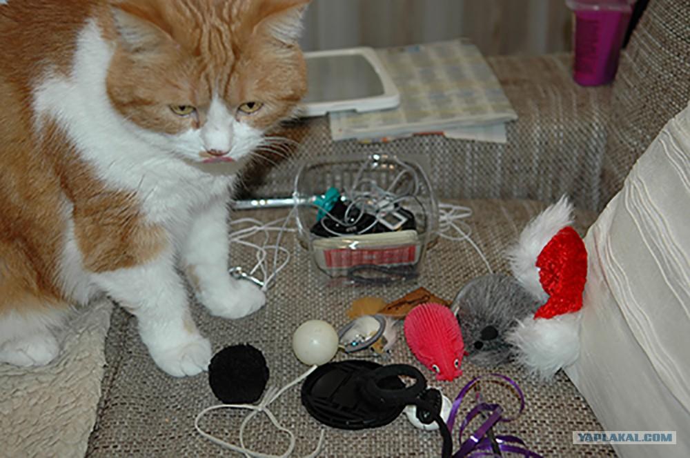 Подарки для котов на день рождения 126