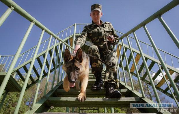 Как щенки становятся защитниками границы