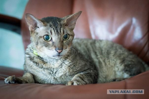 Красноярск! Взрослому коту требуется помощь!