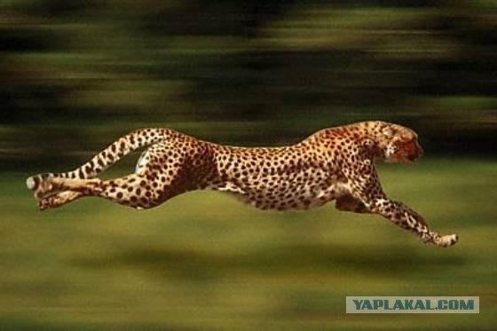 Советник gepard форекс