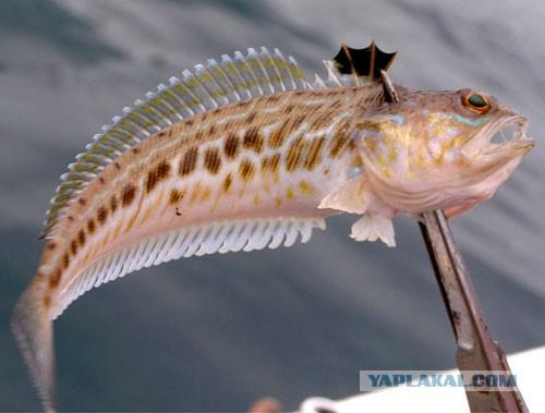 Севастополь. Морская рыбалка.