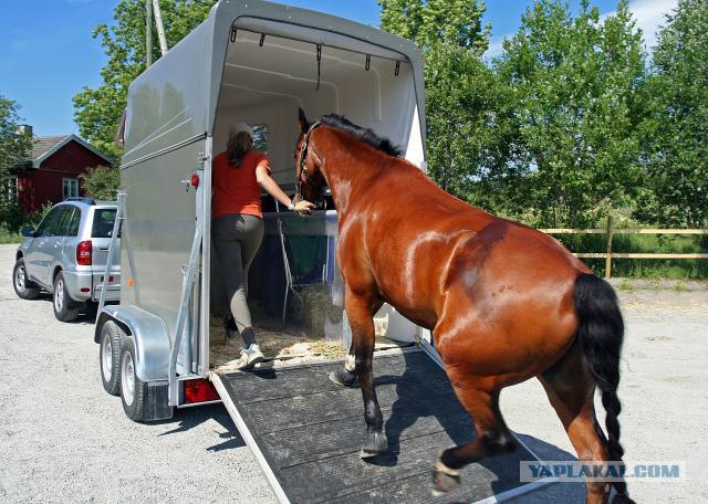 фото лошадей для обоя чистом поле