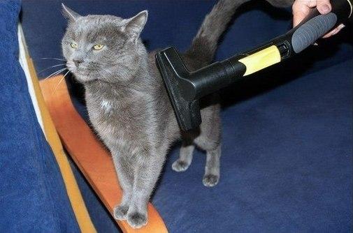 Боевой котяра