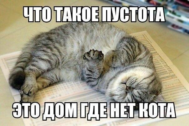 Как я кошку себе завёл