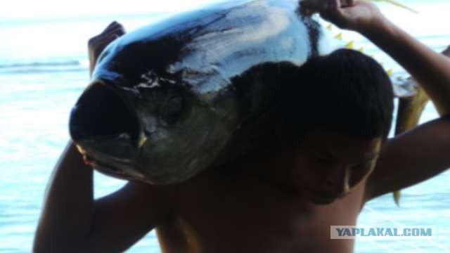 В США мужчину случайно зажарили в духовке с тунцом
