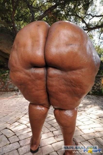 бабские толстые жопы фото