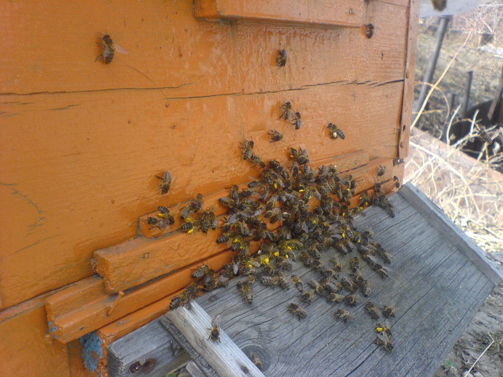 Как сажать пчел на спину 906