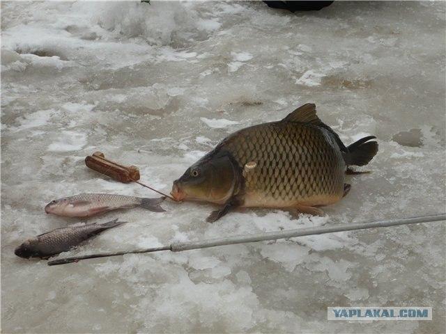 супер карп рыбалка сайт