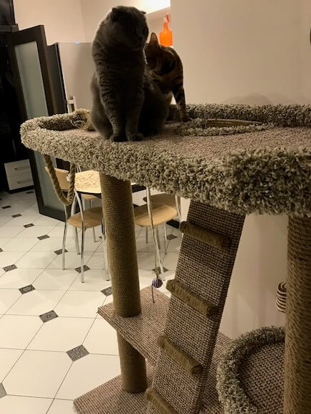 Как я мастерил лежанку для кошек с когтеточкой три яруса