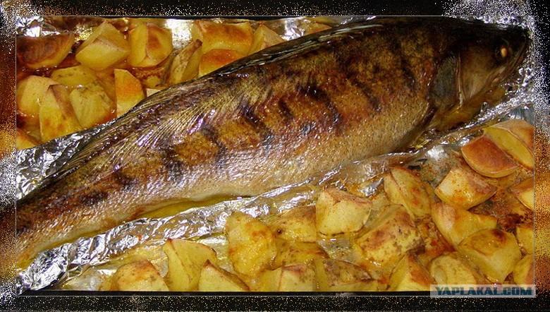 Рыба судак в духовке рецепты видео
