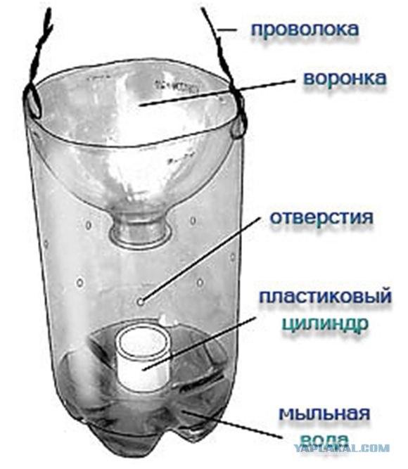 Как сделать ловушку для ящериц из бутылки