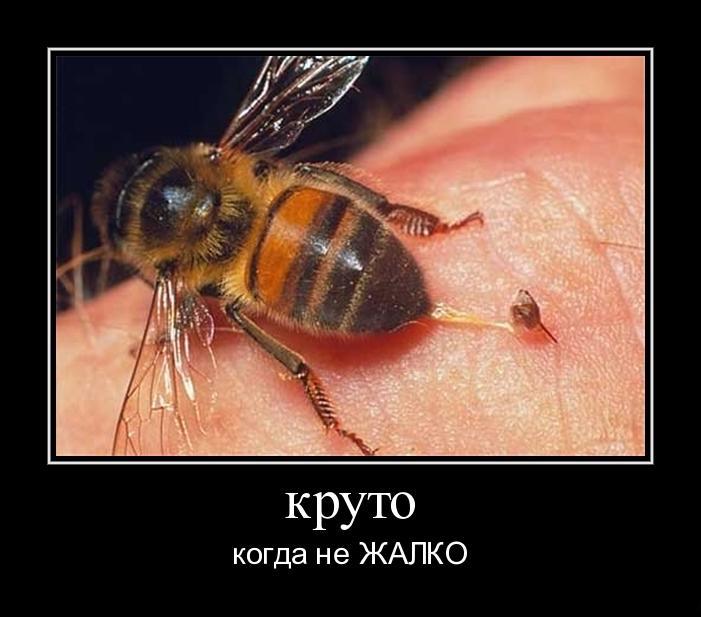 Укусы пчёл излечивают от радикулита и не...