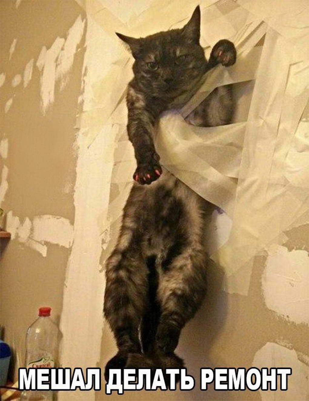 Ремонт квартиры с учётом кошек 32