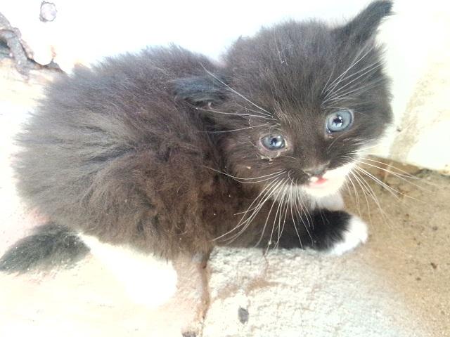 """История о """"самом страшном котёнке"""""""