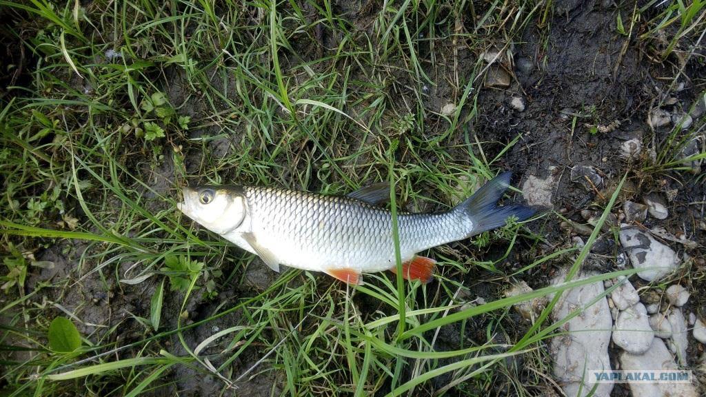 секреты рыбалки хариус
