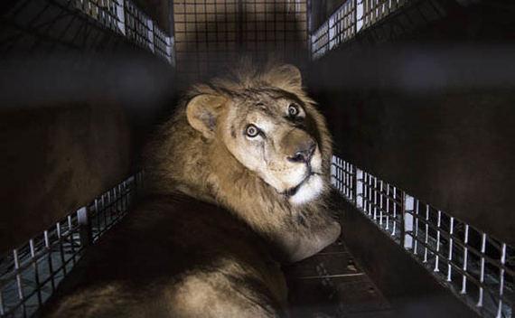 Италия приняла закон запрещающий цирки с животными