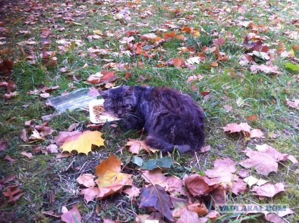 Храбрый Кот тяжелой судьбы ищет хозяина