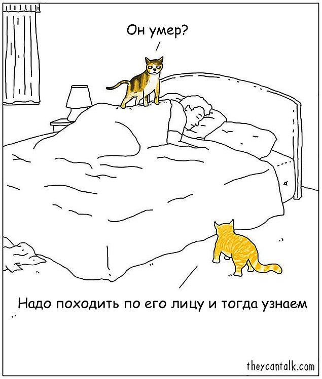 Комиксы, показывающие, что значит жизнь с котом