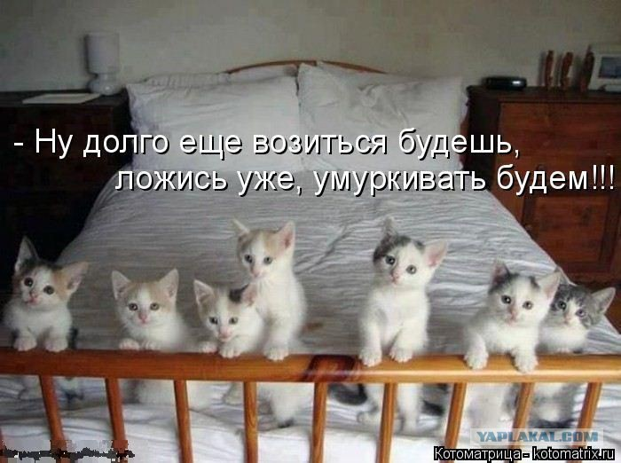ГОВОРИМ ОБО ВСЕМ - Страница 39 2950395