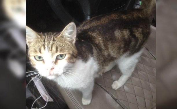 В Туле задержан кот-наркокурьер: зеки научили его носить наркотики в колонию