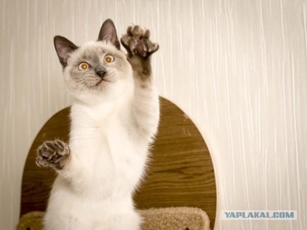 Разные котэ в добрые руки.Москва и МО