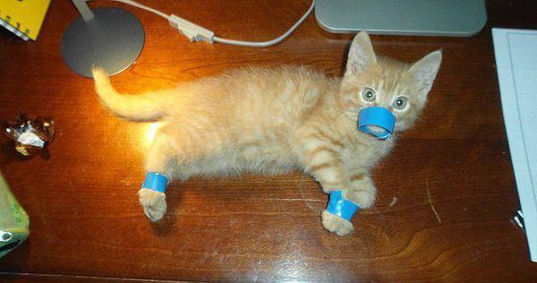 Когда кота нужно вязать