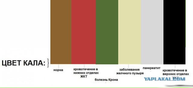 Окрашивание кала в зеленый цвет