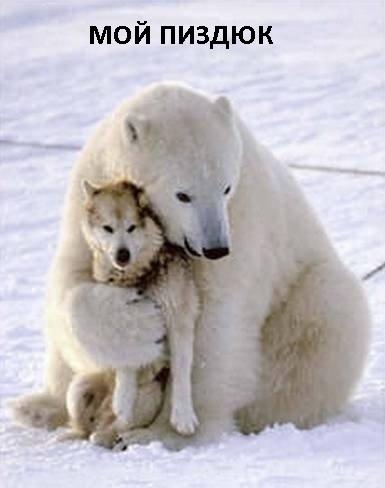 Белый медведь гладит собаку на берегу Гудзонова залива в Канаде