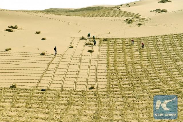 Борьба с пустыней в Китае