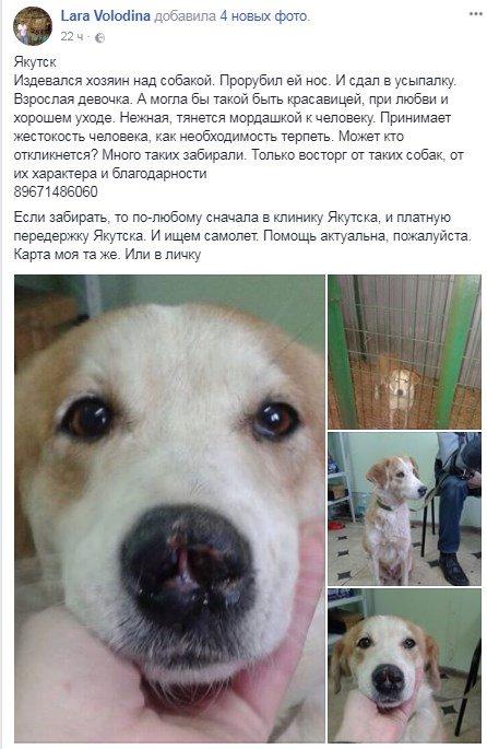 В Москве собака ищет доброй души человека.