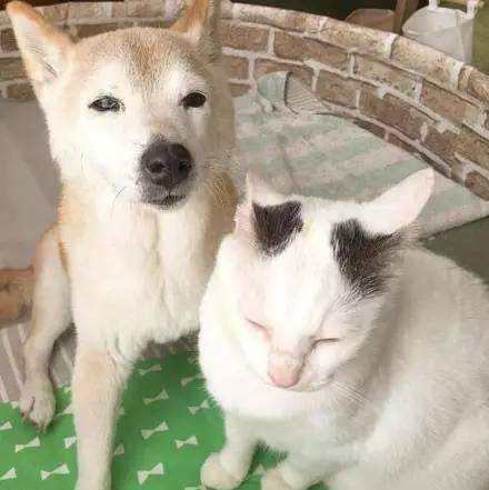 Старый пес и его друг кот