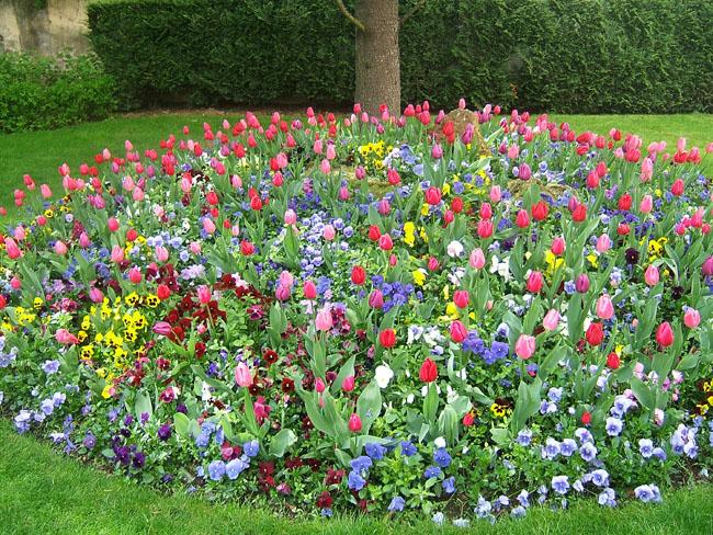 Красивые цветники на даче фото