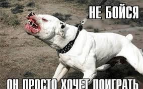 В Госсовете Удмуртии собак бойцовых пород предложили приравнять к огнестрельному оружию