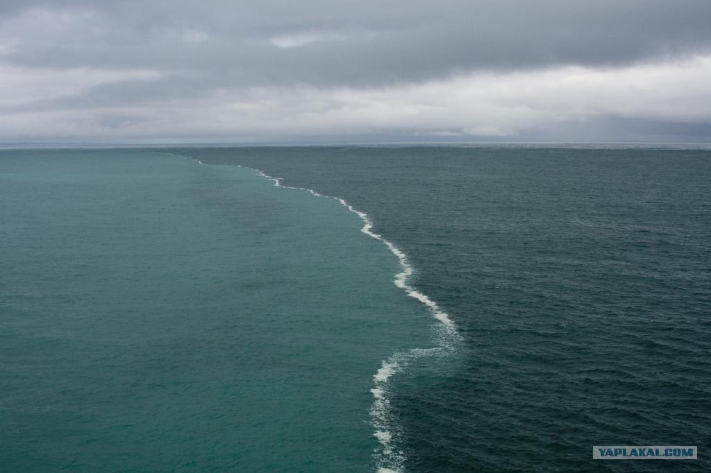 где увидеть балтийское море этот продукт