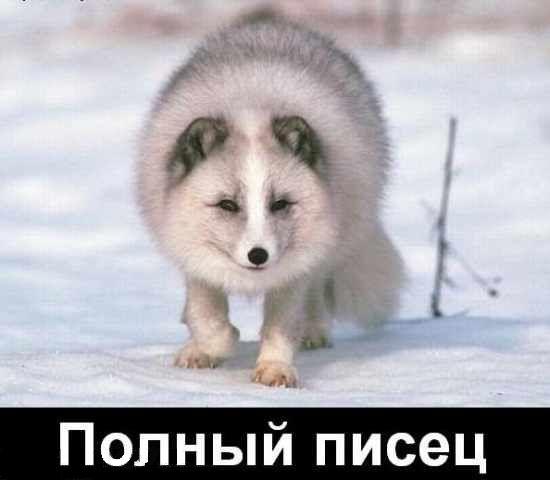 www.yaplakal.com/pics/pics_original/6/1/9/114916.jpg