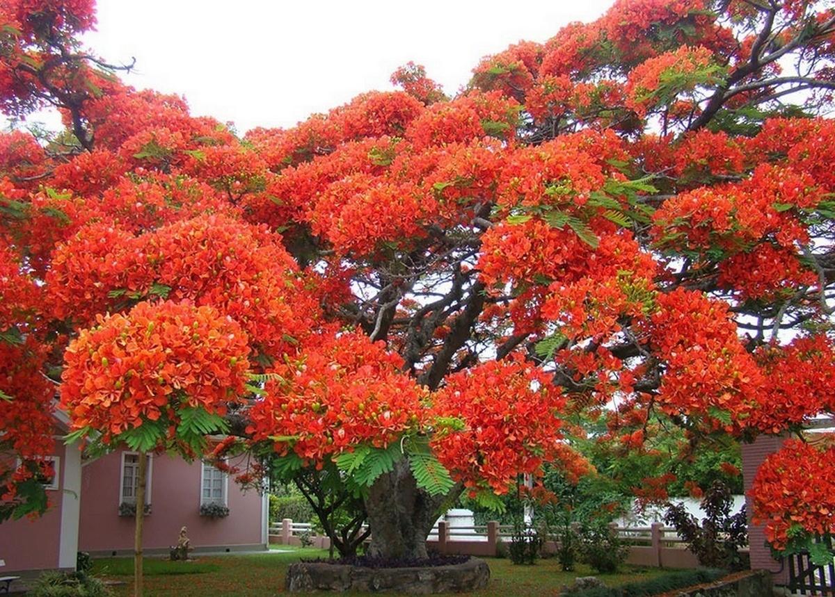 Фото необычных деревьев и цветов