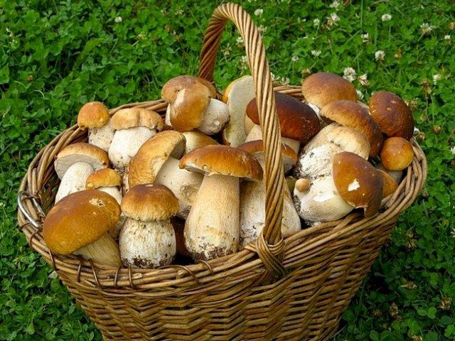 Светлана Орлова предложила ввести налог на сбор грибов и ягод