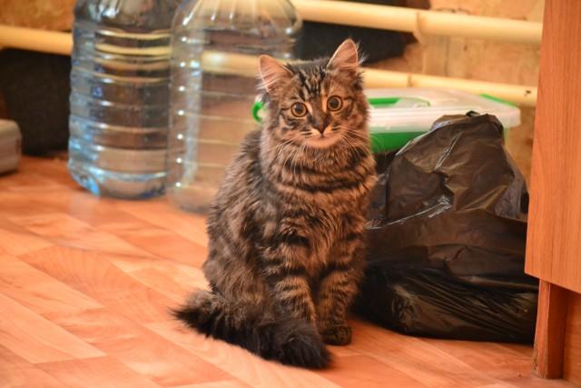 Помогите найти дом котейке