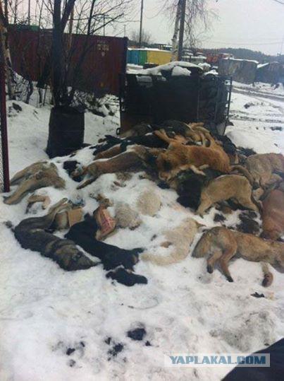 Горы трупов: В РФ перед ЧМ-2018 массово истребляют бездомных животных