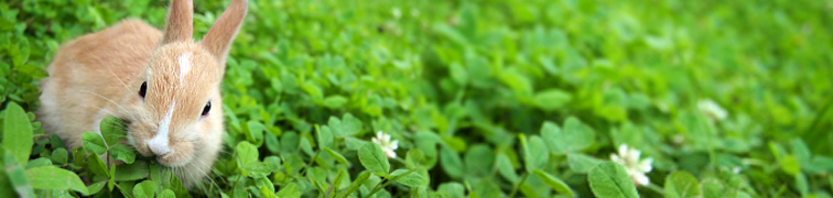 какую траву давать курам фото