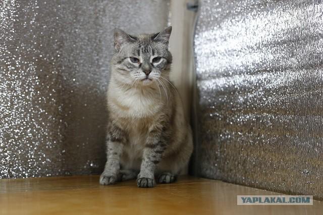 Кошка Мэри Поппинс. Отдам. Москва