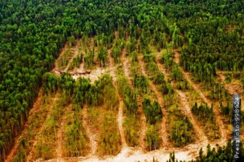 За вырубку 30 тысяч гектаров тайги с группы «Илим» взыскали всего 8,5 миллиона рублей