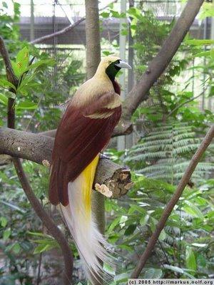 ...птицы описание и фото и фото птица ястреб.
