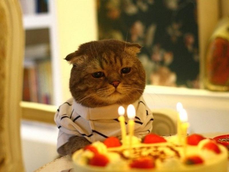 День рождение поздравления с грустью