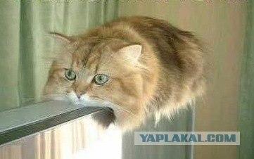 самые смешные коты фото.