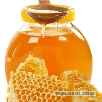 Липчане, налетай на свежий мёд!