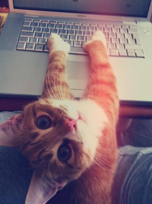 В интернете никто не знает что ты кот, никто!