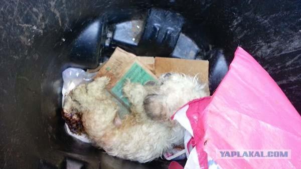 Спасение собаки, найденной в мусорном баке